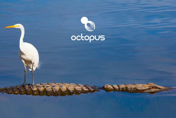image of a white heron bird stood on a crocodile created for Octopus intelligence creativity website design and marketing