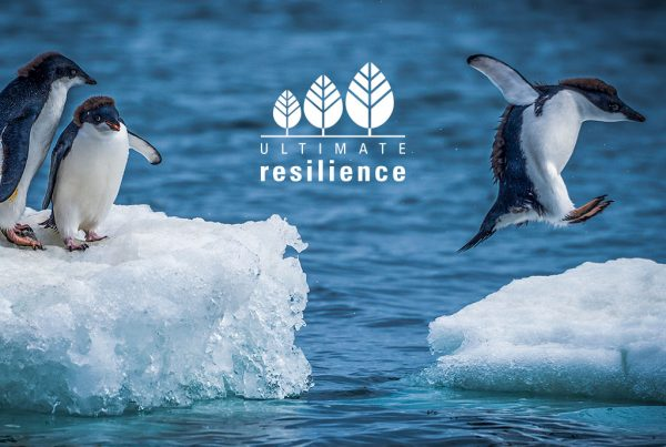 Adelie penguins jumping between two ice floes marketing concept created for Ultimate Resilience creative work website design and marketing