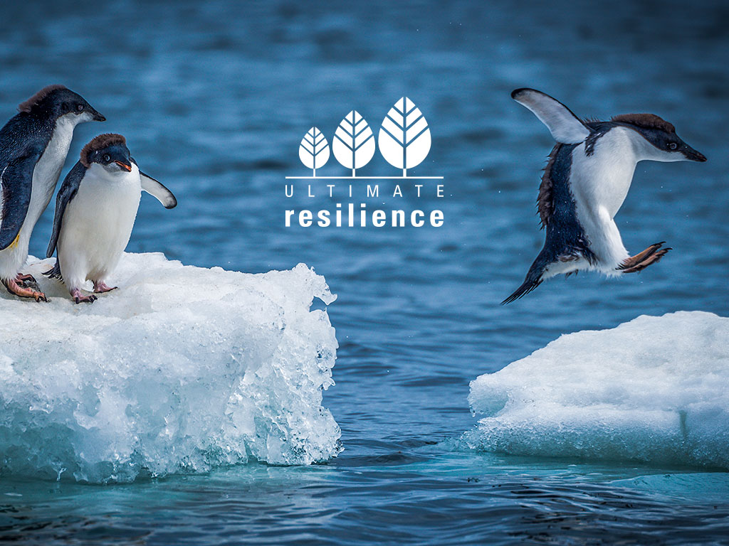 Adelie penguins jumping between two ice floes marketing concept created for Ultimate Resilience creativity website design and marketing